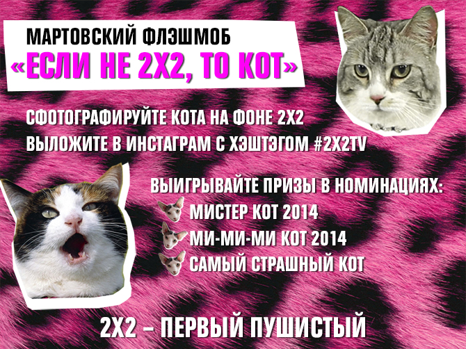 2x2-for-cats-blog.jpg
